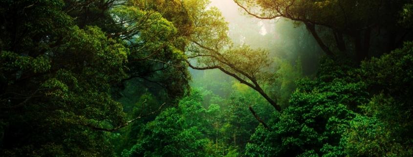 Rainforest - sun shining through the trees