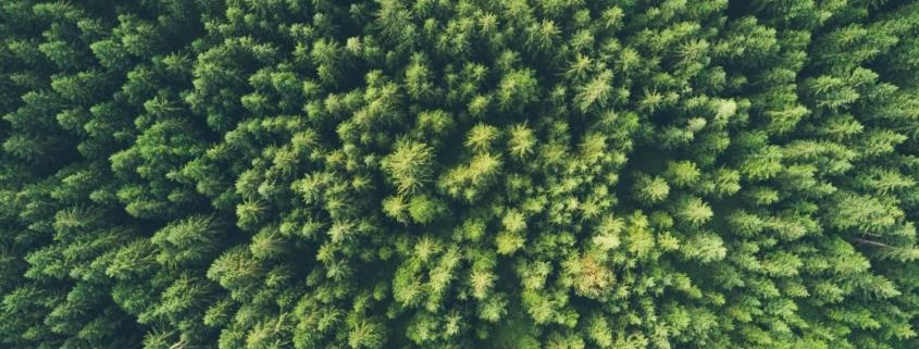 Green trees - environmental considerations