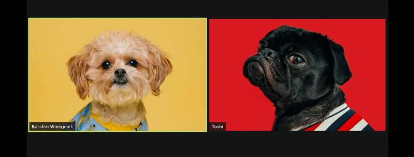 Skype screen - two dogs talking to each other